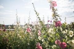 Aufreiter_by_fraukoeppl_web-180713174635